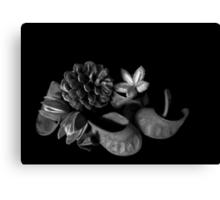 Still life - seed pods - pinhole image Canvas Print