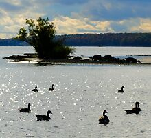 Ring Around the Rosie, or Duck, Duck, Goose? by Lynn Armstrong