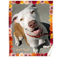 Canine Valentine Poster
