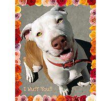 Canine Valentine Photographic Print