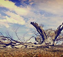 Greygum - Toodyay Fires. by Boxx