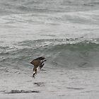 Osprey Dive Sequence - Feet First (1 of 6) by Matt  Harvey