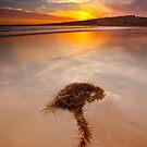 On The Beach by Neil