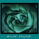 Soft Folds by karen Bradshaw