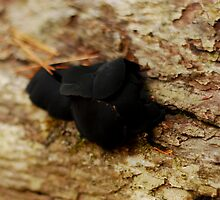 Black Fungii by RonSparks