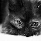 Nyx again - still cute!  by Mel Preston