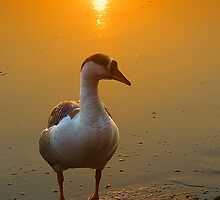 Golden Morning Light by Mukesh Srivastava