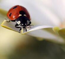 Ladybug by Ellen van Deelen