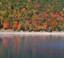 Allegheny national forest by snehit