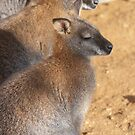 Bennett's Wallabies by evilcat