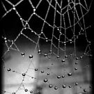 a spider web and I'm caught in the middle by lisaellen