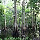 Cypress Swamp by floridan