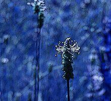 White Prairie Clover by BonnieJames