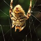 Mr. Spider by Aileen David
