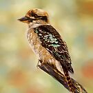 Kookaburra by Michelle Wrighton