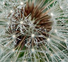 Dew Drops by Curtis  Sheppard