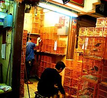 Hong Kong Bird Market by Pippa Carvell