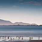 Gull Beach by John Violet