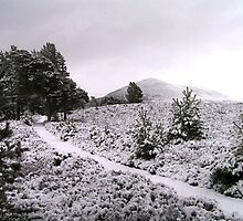 Rothiemurchus - Cairngorms by Kat Simmons
