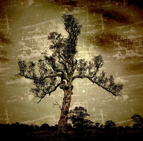 My favourite tree by Basia McAuley