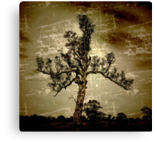 My favourite tree Canvas Print