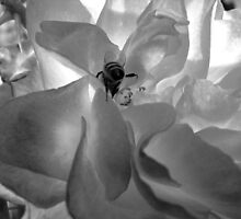 BW Rose and Bee by Tricia Stucenski