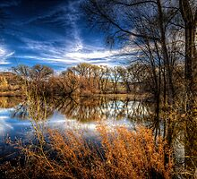 Through the Foilage by Bob Larson