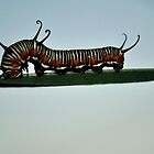 Colourful Caterpillar on a Leaf by rjmp
