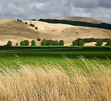 Central Hawkes Bay by Lisa Wilson