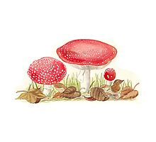 Amanita Muscaria by Maureen Sparling