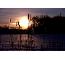 Dawn Through the Reeds Photographic Print