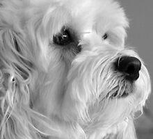 Monalisa, the Dog by CarmenLygia