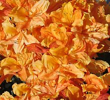 Bright Orange Azaleas by art2plunder