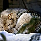 Snuggled Up by Yannik Hay
