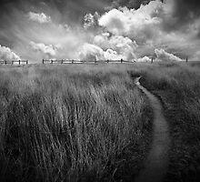 Point Cabrillo Trail by Richard Mason