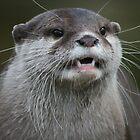 Otterly Content by ellismorleyphto
