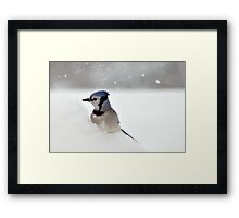 Cautious Diner Framed Print