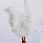 White on White Dancing Goose by livinginoz