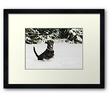 Jumping for Joy Framed Print