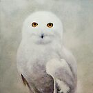 Hildegaard (Snowy Owl) by Acey Thompson