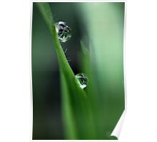 Raindrops on Grass Poster