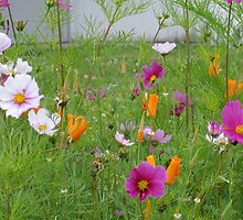 Cosmos and California Poppies 2 by art2plunder