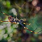 Golden Orb Weaver by Tony Steinberg