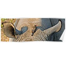 Rhinos Do Have Something Between Their Ears Poster