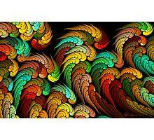 Sleeping Parrots Photographic Print