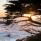 Headland Cove, Point Lobos, Carmel California by Maria Draper