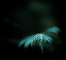 ...even the deepest forest receives a little sunshine... by Geoffrey Dunn