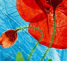 Pressed Field Poppy Flower Art Photo by Paul Williams by Paul Williams