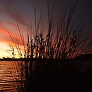Through the reeds, the sun set reddens by Karen Stackpole