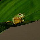 Dainty Frog by David Cash